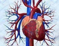 diyabet-koroner-kasiyum-kalp