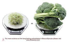 brokosli