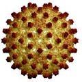 hepatit-virusu
