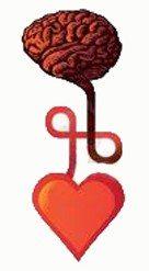 beyin-kalp-tansiyon