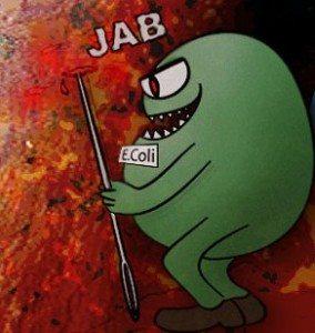 e-koli-coli-bakteri