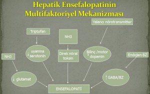 Hepatik Ensefalopati 2