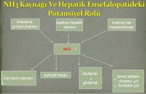 Hepatik Ensefalopati tedavisi medikal akademi