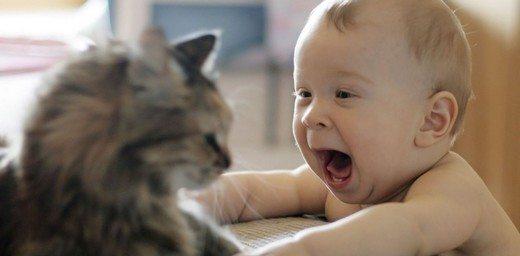 bebek-ve-kedi