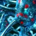 beyin hücresi nöron