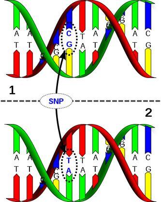 dna-genetik