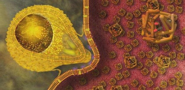 malaria-sitma-bakteri