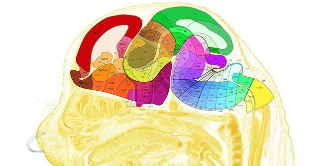 sagittal-beyin-graf