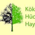 agac-kok-hucre