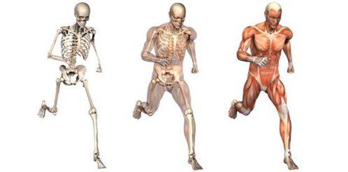 fizyoterapi-osteopati-ortopedi-kas-iskelet