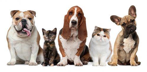 hayvan-pet-kedi-kopek