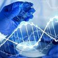 nutrigenetik-dna