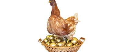 tavuk-altin-yumurta