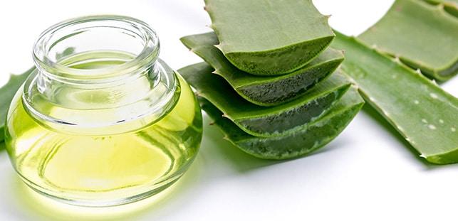 Aloe veranın antioksidan ve antibakteriyel özellikleri vardır ile ilgili görsel sonucu