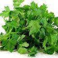 maydanoz-salata-yesillik-3