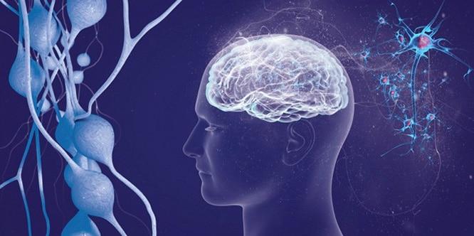 Multipl Skleroz Ms Hastalığı Nedir Nedenleri Belirtileri Ve Tedavisi