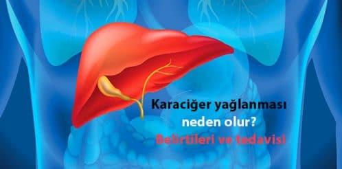 Liver-karaciger-18