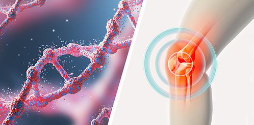 gen-bacak-Glukozamin-1